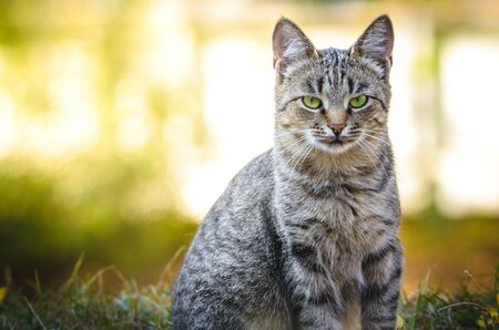 Portrait of a serious cat on a background of autumn Stock Photo