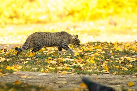 Cat on the street on an autumn day