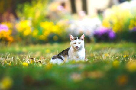 Black white cat in green grass Stock Photo