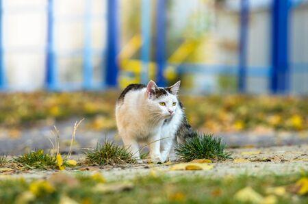 Cat hunts on an autumn day