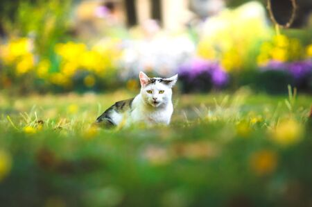 Cat in the grass with flowers with funny emotions Stock Photo