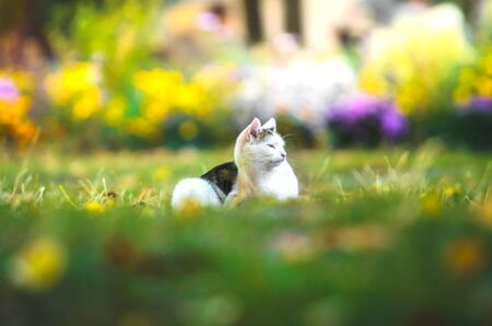 Cat in the grass with flowers with funny emotions itches