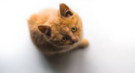 Sad ginger fluffy stray kitten sits on a white windowsill and looks up