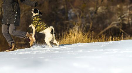 A series of photos of a dog on a snowy winter day but in sunny weather, which is joyful and runs with its hzayin along the snowy hills, the photos are taken from far and the dog jumps and plays in full snow in full growth. Kharkov, Ukraine.