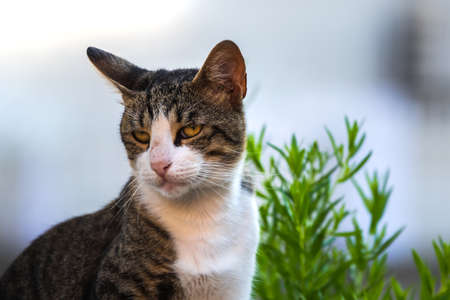 European cat in the old town, Montenegro, recreation and tourism, pet animals.