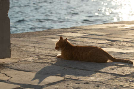 Cats are residents of the sea city in Montenegro, Perast, watch the birds and seagulls and relax enjoying the beauty of the sea and landscapes Stock Photo