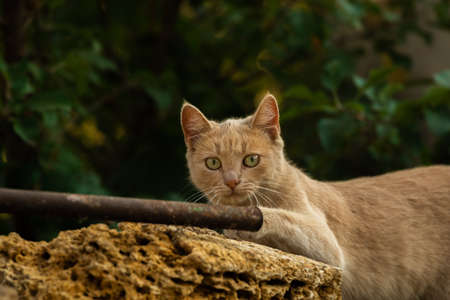 Stray cats in the backyard of a country house in Ukraine