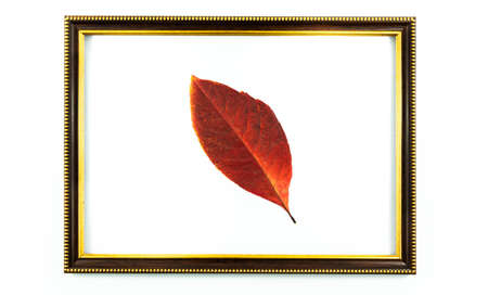 Autumn wooden compositions decorative frame and attributes of autumn, leaves and berries, as well as postcards with empty fields, on a white isolated background