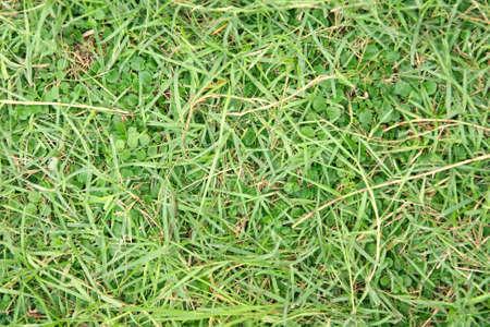delightfully: grass