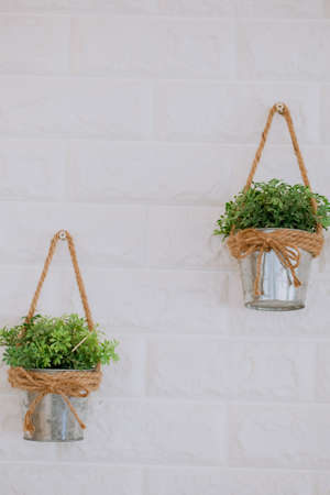 ornamental trees samll in Aluminum bucket with rope  twine bow. On a white background.It is cute and clean.