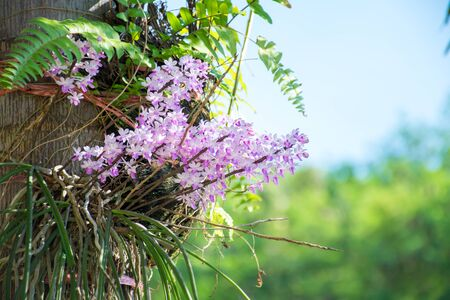 ferns and orchids: Purple orchids on a tree.