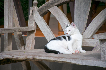 wood chair: A cat on wood chair