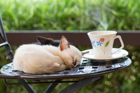 Kat cafe, schattig kitten slapen op een stoel met een kopje koffie