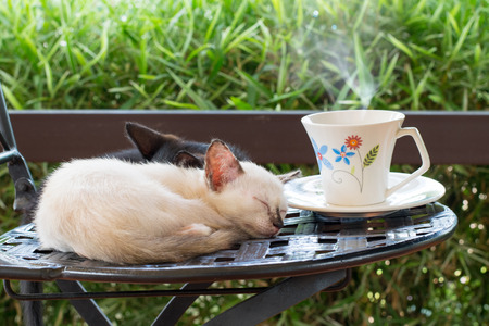 Cat cafe, cute kitten sleeping on a chair with a cup of coffee