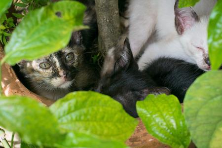 undergrowth: Cat peeking through the undergrowth.