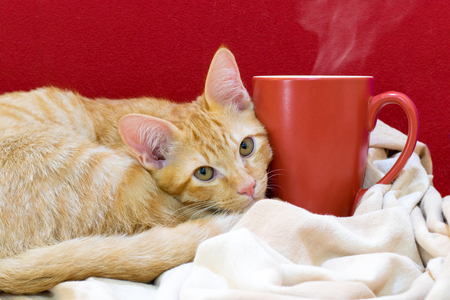 Cat cafe, portrait of a cute cat with a cup of coffee Stock Photo