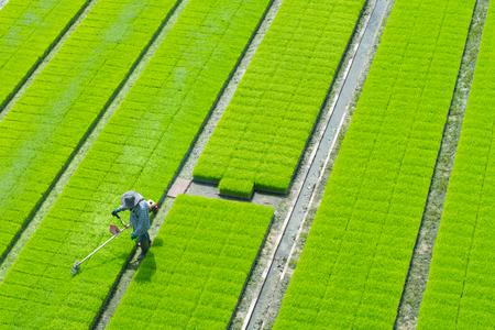Bovenaanzicht van de boer gebruikte een grasmaaier in het groene rijstveld