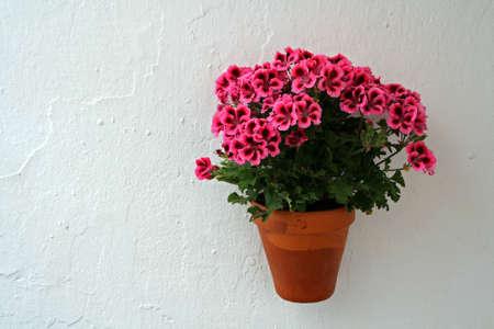 flowerpots: Flowerpot in a wall Stock Photo