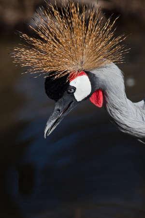 crested: Crested birds