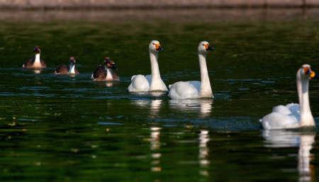 waterfowl: Waterfowl lake in China zoo