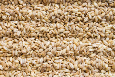 background of raw dry grains of pearl barley decomposed by furrows.
