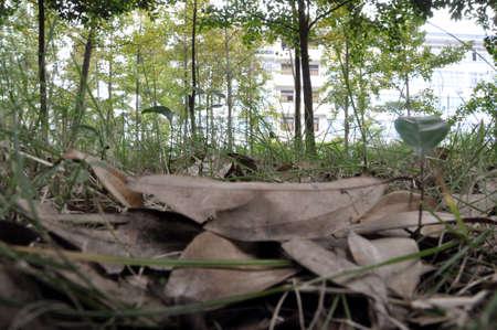 intermediate: Fallen leaves
