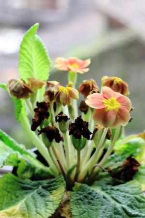 backlighting: Backlighting flowers