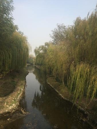 brooklet: Stream water