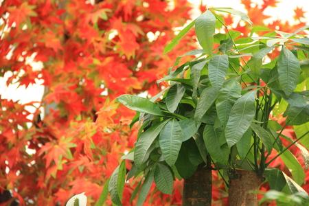 rhyme: The rhyme of autumn Stock Photo