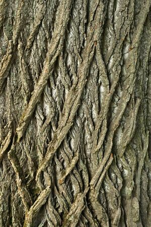 Close up of a tree trunk showing interesting criss-cross pattern. Imagens