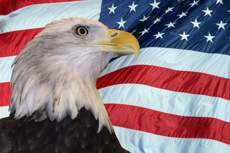 Bald eagle against an American flag backdrop. photo