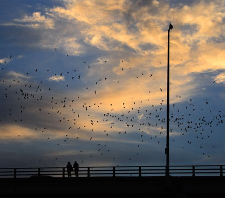 Vleermuizen vliegen uit bij zonsondergang in Austin, Texas. Stockfoto