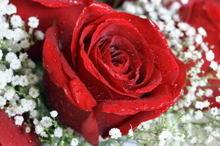 Red rose and baby's breath floral arrangement. Imagens - 3015978