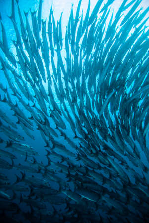 diver take a photo video upon coral bali indonesia scuba diving 版權商用圖片