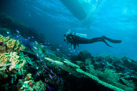 scuba diving diver woman sea underwater coral indonesia bali girl