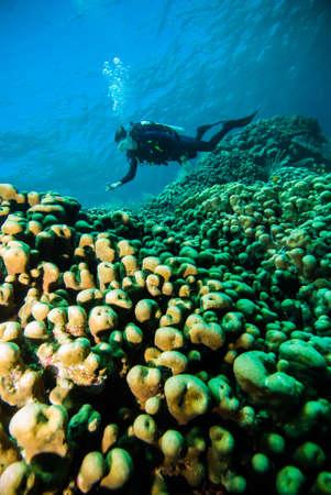 scuba diving diver woman sea underwater coral indonesia bali girl