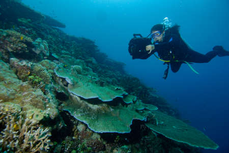 Dive scuba Indonesia Halmahera diver