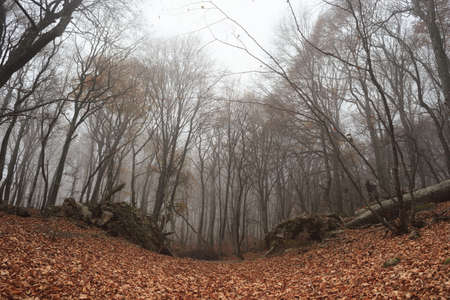 Autumn forest with fog among trees and a lot of fallen leaves photo