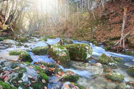 Beautiful rapid river with mossy stones flowing through autumn forest photo
