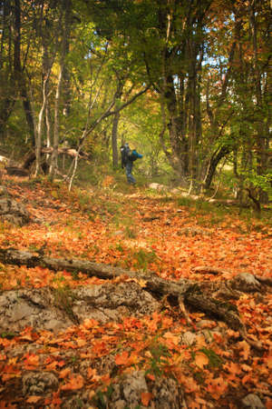 pass away: Autumn forest with orange and yellow leaves on the ground and figure of outgoing person with backpack at the background