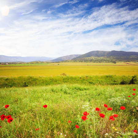 Scenic summer field with green grass and tender red poppies at the background of mountains. Shallow dof. Focus on foreground.