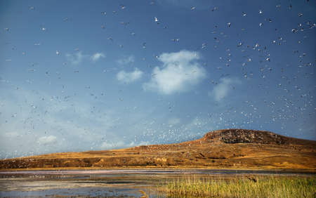 Huge flock of scared little birds flies above swampy drying up salt lake in blue cloudy sky at the background of steppe hills. Stock Photo