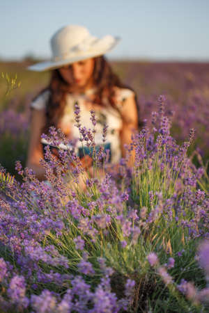 Young beautiful woman with long brown hair in dress and hat sitting on lavender field with book in her hands and reading. Shallow dof. Focus on lavender at foreground. Stock Photo
