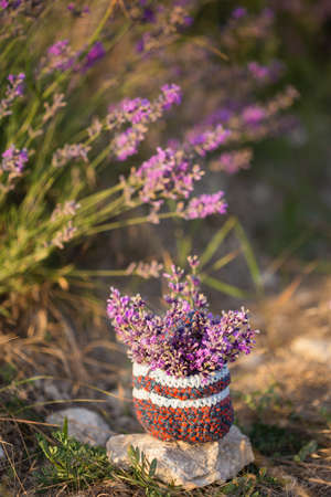 Small knitted basket with bunch of lavender twigs stands on blooming flower field under summer sunrise. Shallow dof. Focus on basket. Stock Photo