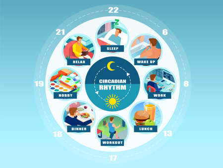 Vector infographic of a circadian rhythm and daily routine of a young man. Wellbeing concept