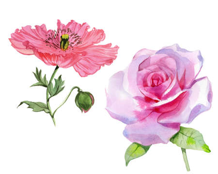 Set of watercolor flowers. Pink roses and red poppies