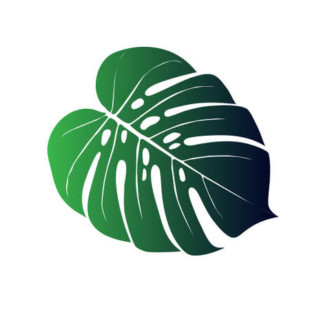 Monstera Deliciosa plant leaf from tropical forests isolated. Vector for greeting cards, flyers, invitations, web design
