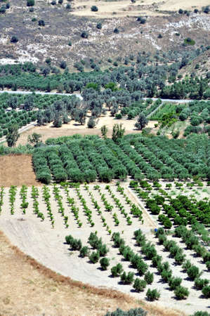 Agriculture in Crete, Greece.