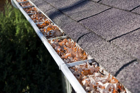 clogged: Home maintenance: fall leaves clogging rain gutter.