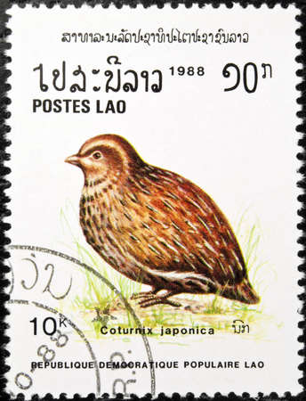 japanese quail: LAOS - circa 1988:stamp features a Japanese Quail bird (Caturnix Japonica), circa 1988 in the Lao Peoples Democratic Republic.